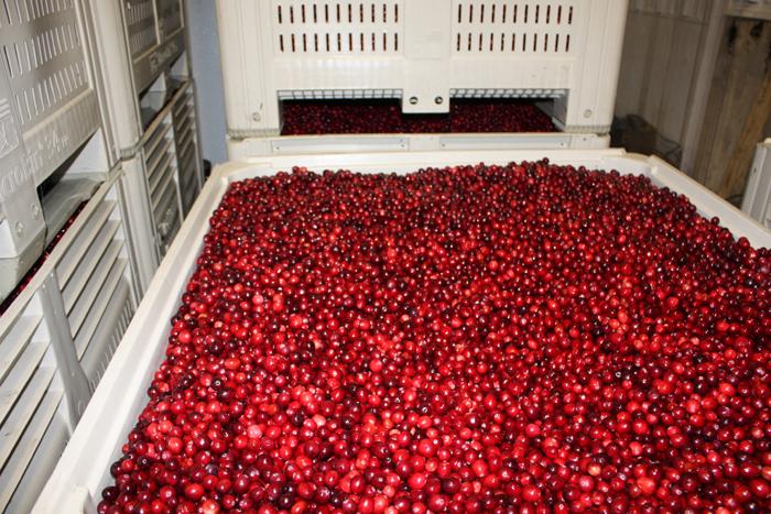 Terra Beata Cranberry Farms